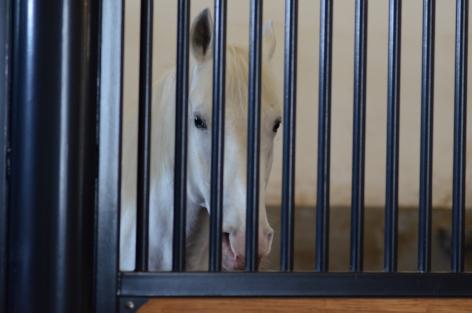 Top Horse, Behind Bars