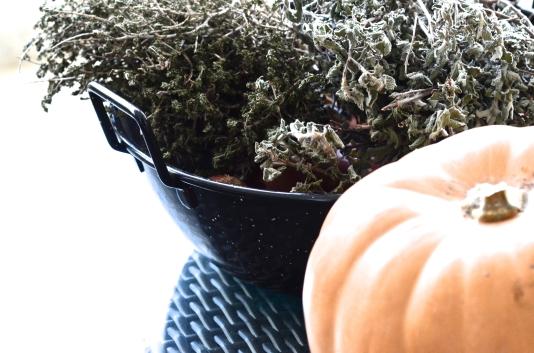 Pumpkin, overex