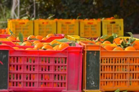 Orange Crates